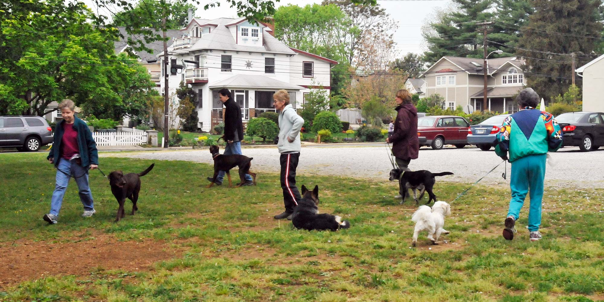 Annapolis Dog Obedience Training and Walking by Laurie Neomany